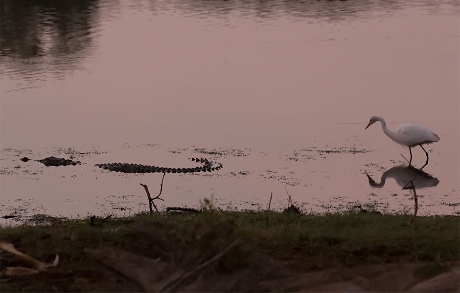 Alligator & Stork, Yala National Park
