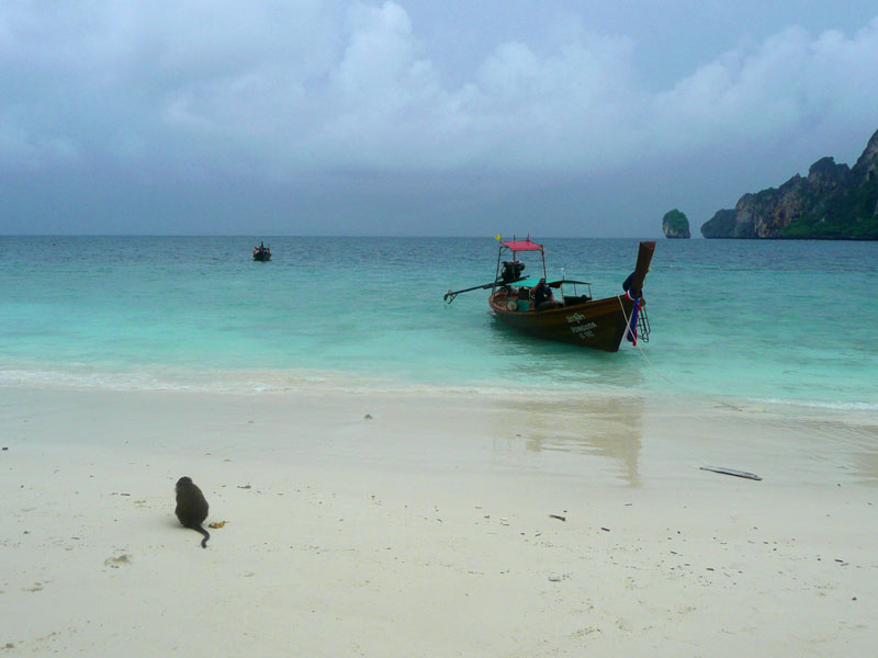 Monkey on Koh Phi Phi Beach