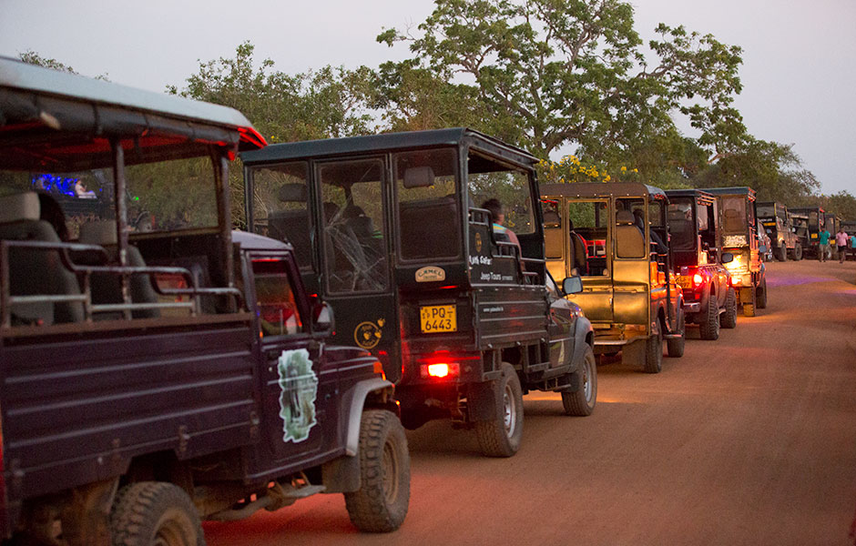 Jeeps, Yala National Park